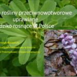 """Wybrane rośliny przeciwnowotworowe uprawiane i dziko rosnące w Polsce – prezentacja, jaką przedstawiłem na konferencji """"Świat bez raka – naturalne metody zapobiegania i leczenia"""", która była zorganizowana przez Instytut """"Zdrowie z Natury"""" i odbyła się 25 października 2014 roku w Toruniu."""
