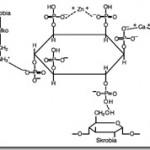 Soja – Glycine max (L.) Merr. (Fabaceae) w medycynie naturalnej