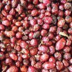 Owoc dzikiej róży – Fructus Rosae