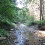 Takich warsztatów terenowych jeszcze nie było… 19 sierpnia 2016 r.– wędrówka zielarska/warsztaty terenowe zielarskie doliną potoku Panna w Beskidzie Niskim, 10 km wędrówki pieszej z omawianiem roślin i surowców wodno-mineralnych.